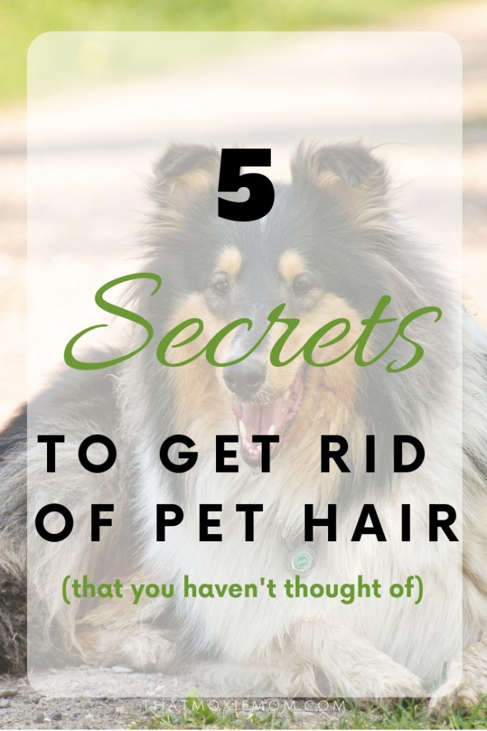 5 secrets to get rid of pet hair